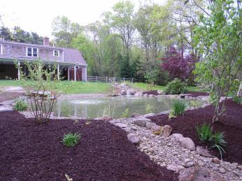 Natural swimming ponds for Garden pond overflow design